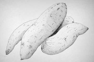 Scientific Illustration: Artists 2007: Erin Leckey
